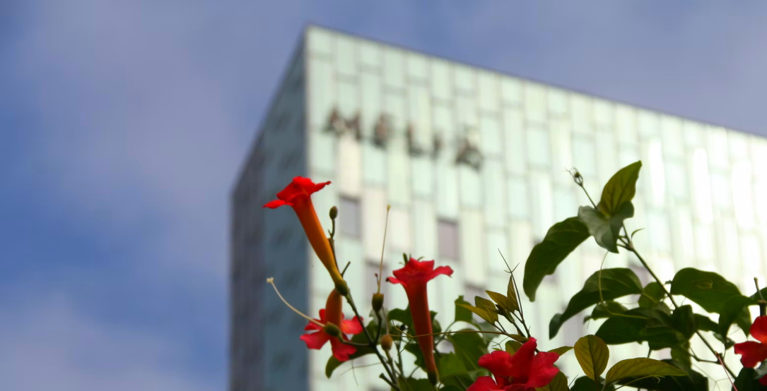 Cyberattack hits Meliá, one of the largest hotel chains in the world